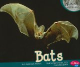 Bats (Nocturnal Animals)