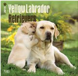 Labrador Retrievers, Yellow 2015 Square 12x12 (Multilingual Edition)