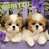 Shih Tzu Puppies 2018 12 x 12 Inch Monthly Square Wall Calendar, Animal Small Dog Breed Puppies