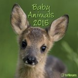 2015 Baby Animals Wall Calendar
